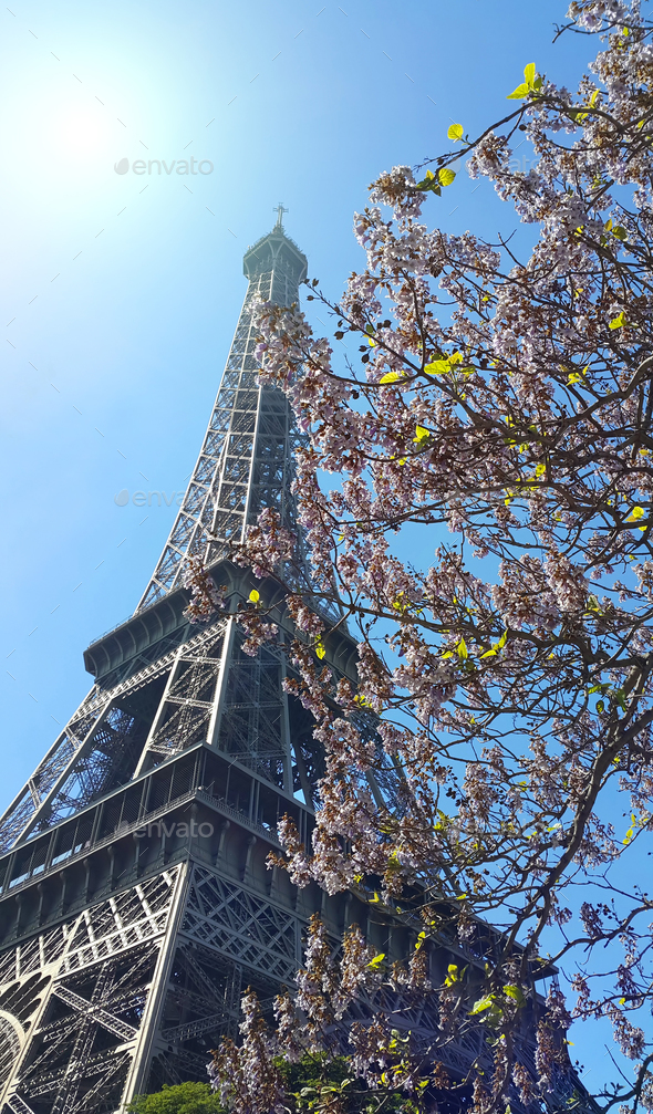 Eiffel Tower on blue sky sunny background with beautiful bloomin - Stock Photo - Images