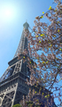 Eiffel Tower on blue sky sunny background with beautiful bloomin - PhotoDune Item for Sale