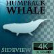 Humpback Whale Swimming Loop - VideoHive Item for Sale