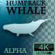 Humpback Whale Swimming - VideoHive Item for Sale