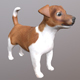 Jack Russell Terrier - 3DOcean Item for Sale