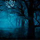 Dark Night forest - GraphicRiver Item for Sale