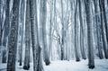 Frozen winter wonderland forest - PhotoDune Item for Sale