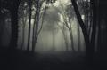 Path through misty haunted woods - PhotoDune Item for Sale