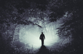 Silhouette of man in mysterious light in haunted woods - PhotoDune Item for Sale