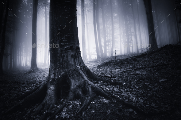 Old tree with giant roots in dark forest with fog - Stock Photo - Images