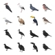 Bird Species - GraphicRiver Item for Sale