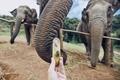 Feeding of elephant - PhotoDune Item for Sale