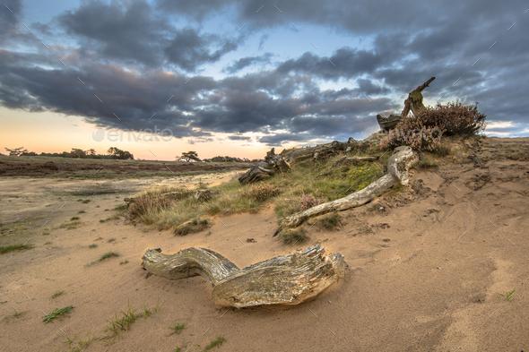 Sunset over logs in Hoge Veluwe national park - Stock Photo - Images