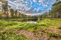 Forest lake surrounded by trees in Hokensas - PhotoDune Item for Sale
