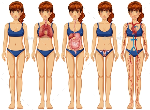 Woman Body And Anatomy By Blueringmedia Graphicriver