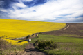 Curving road in rape field - PhotoDune Item for Sale
