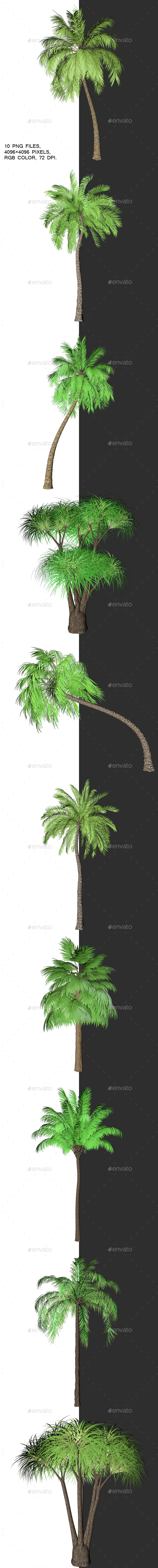 Packing Palm Trees With Alpha Channel - 3D Renders Graphics