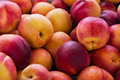Red yellow nectarine abundance harvest background - PhotoDune Item for Sale