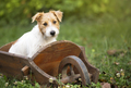 Smart cute puppy dog sitting in the garden - PhotoDune Item for Sale