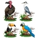 Four Different Kinds of Wild Birds