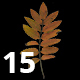 Pack of 15 Isolated Sorbus Leaves Textures