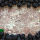Blackberries on a wooden table - PhotoDune Item for Sale