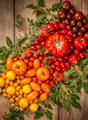 Various organic tomatoes - PhotoDune Item for Sale