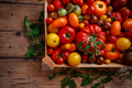 Flat lay of colorful tomatoes - PhotoDune Item for Sale