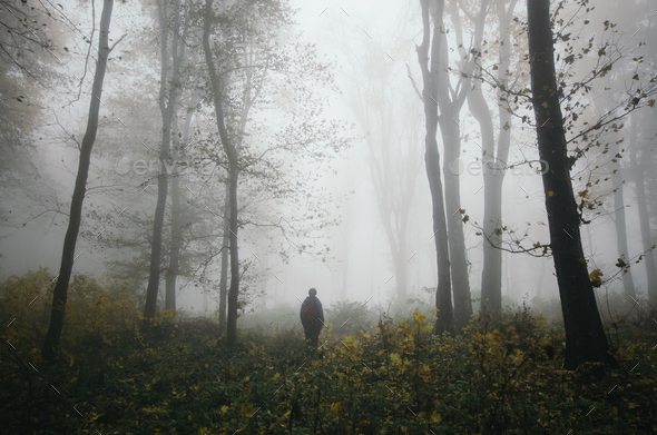 Walk in foggy autumn woods - Stock Photo - Images
