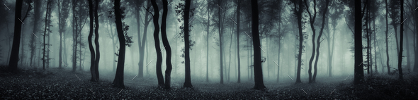 Mysterious forest panorama with fog - Stock Photo - Images