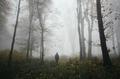 Walk in foggy autumn woods - PhotoDune Item for Sale