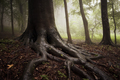 Tree with giant roots in enchanted woods - PhotoDune Item for Sale