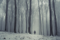Man walking in mysterious winter forest with snow - PhotoDune Item for Sale