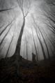 Spooky silhouette near giant tree in haunted mysterious forest with fog - PhotoDune Item for Sale