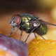 Green fly on fruit slices macro - PhotoDune Item for Sale