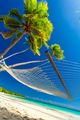 Empty hammock in the shade of palm trees, Fiji Islands - PhotoDune Item for Sale