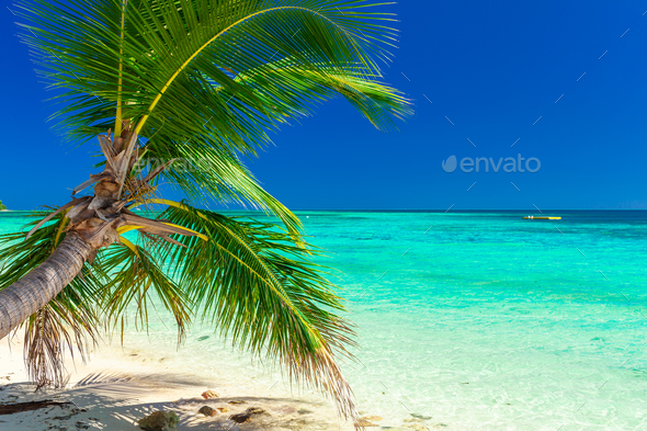Tropical beach with coconut palm trees and clear lagoon, Fiji Is - Stock Photo - Images