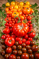 Colored fresh tomatoes - PhotoDune Item for Sale