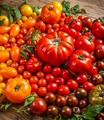 Colorful organic tomatoes - PhotoDune Item for Sale