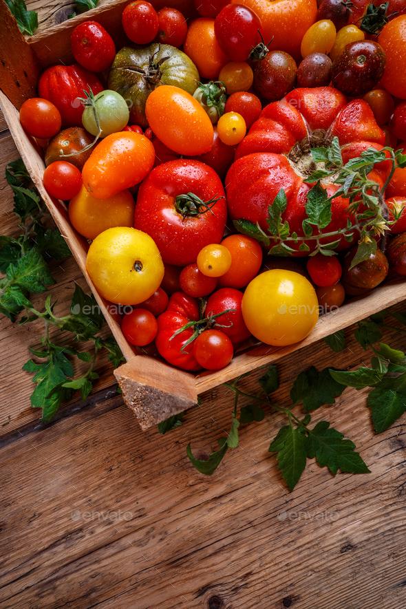 Ripe tomatoes - Stock Photo - Images