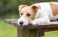 Waiting cute dog puppy lying on a wooden bench - PhotoDune Item for Sale