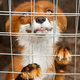 Playful Fox in a cage - PhotoDune Item for Sale