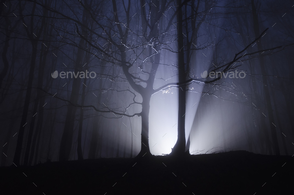 Light rays forest at night - Stock Photo - Images