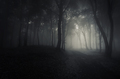Scary woods at night with mysterious fog - PhotoDune Item for Sale
