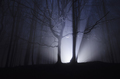 Light rays forest at night - PhotoDune Item for Sale