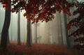 Autumn woods with red leaves and fog - PhotoDune Item for Sale