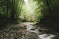 Morning light in forest river landscape - PhotoDune Item for Sale
