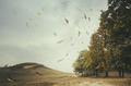 autumn landscape with leaves floating in the wind at the edge of - PhotoDune Item for Sale