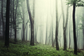 Magical light in enchanted forest with fog - PhotoDune Item for Sale