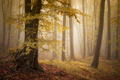 Enchanted autumn forest with fog - PhotoDune Item for Sale
