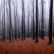 Autumn in the forest with mist - PhotoDune Item for Sale