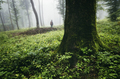 man silhouette in green forest with old trees and green vegetati - PhotoDune Item for Sale