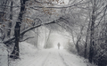 fantasy woods in winter, man walking on snowy forest road - PhotoDune Item for Sale
