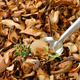 scoop of dried mushrooms - PhotoDune Item for Sale